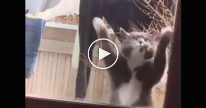 Cat Wants To Come Inside, But How He Gets His Humans Attention Is Just TOO Cute…Watch Video!