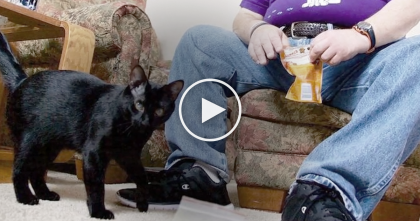 Dangerous Seizures Would Nearly Kill Him, But This Amazing Cat Knows Just What To Do… This is AMAZING