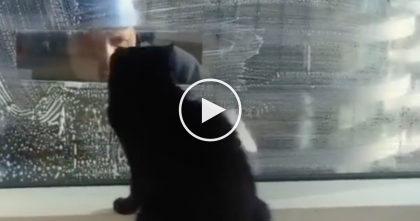 Every Time He Comes To Wash The Windows, He Gets The CUTEST Surprise Ever… Just Watch!