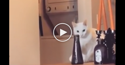 Evil Cat Is About To Knock The Vase Over, But He Gets Caught, Watch What He Does Next… LOL!!