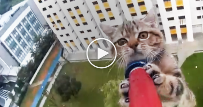 Extremely Dangerous Cat Rescue Was Recorded On Camera And My Heart Dropped Watching It… OMG