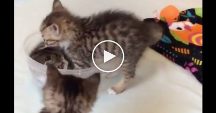 Foster Kittens Are Fighting For The Bowl, But If You Keep Watching… It's Just CUTER Than Ever!!
