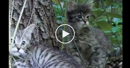 He Went For A Hike, But Then All Of A Sudden, He Notices Kittens Meowing Desperately… Watch What Happens After!