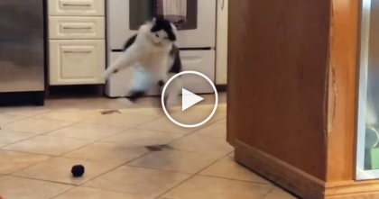 Watch The Hilarious Reaction When This Fluffy Cat Discovers The Round Toy Balls…It's TOO Funny!