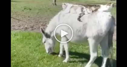 Horse Starts Walking Towards Them, But When You See The Cats… This Is Hilarious, Just Watch!!