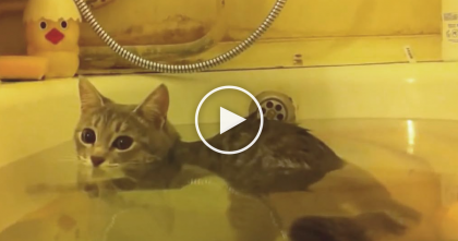 Kitten Sees His Owner In The Bathtub, But Keep Watching To See What He Does Right After… OMG.