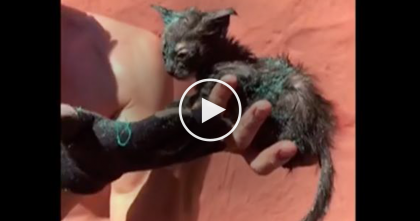 "Kitten Stuck In Drain Nearly Dead, But When This Man Heard The Cries… ""Can't Believe He Made It 48hrs"""