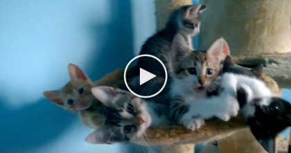 Kittens Start Dancing In Sync And You Can't Help But Feel Better After Watching This… AWWWW!!