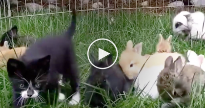 Kittens Were Raised With Baby Rabbits, But What They Start Doing Is TOO FUNNY… Just Watch!!