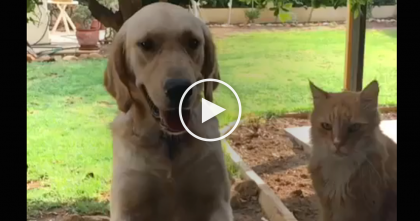 Kitty Tries Stealing Dog's Treat, But Then Instantly Regrets His Decision… Oh. My. GOODNESS.