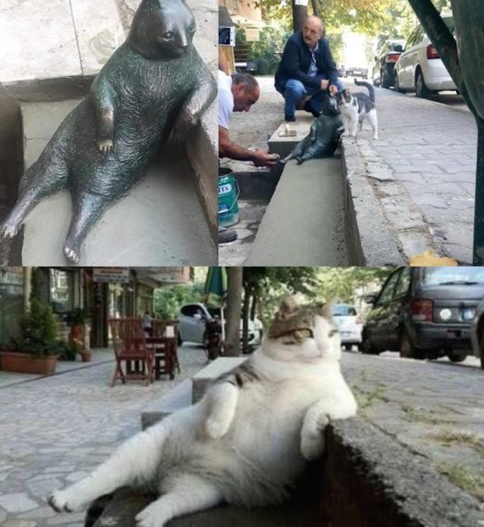 laid-back-cat-was-loved-by-locals-but-now-he-has-left-a-mark-nobody-can-forget-3