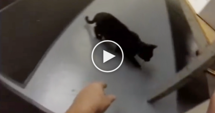 Man Traps A Cat, But Then Gets An Unexpected Surprise That He'll Never Forget… My Heart Melted!