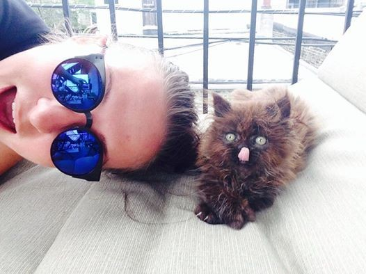 meet-brownie-the-cat-who-almost-didnt-make-it-but-one-year-later-the-end-result-is-just-amazing-4