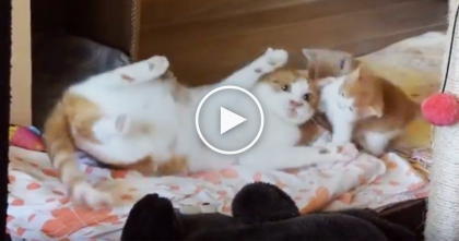 Mommy Cat Tries To Give Her Two Kittens A Bath, But They're Response Is TOO Cute… Just Watch!