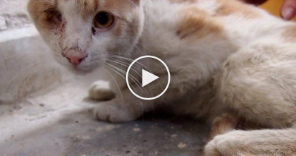 One-Eyed Feral Cat Goes To The Vet, Now Watch The Transformation… This Is Incredible, Just Watch!!