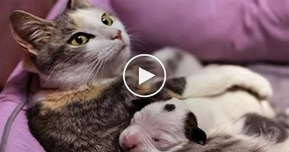 "Puppy Was Dying, But When This Cat Noticed What Was Happening, AMAZING… ""It's A Complete Miracle!"""