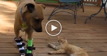 She Got A Rescue Dog, But She Didn't Expect This Feral Cat To Be SOO Friendly… Just Watch, Awwww!