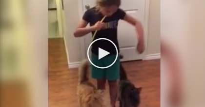 She Takes Two Straws And Blows Air, But Then Watch The Cats' Reaction To It… Oh My, LOL!!