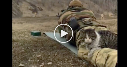 Stray Cat Notices Human, But Keep Watching What He Does Next… Sweetest And Bravest Cat Ever!