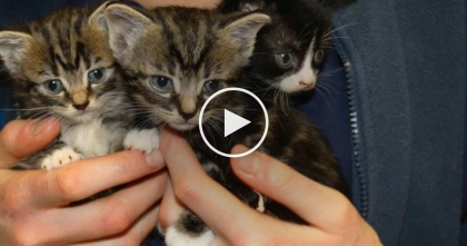 They Heard Meowing Coming From An Empty Chip Box, But Then They Opened The Lid… OMG!!