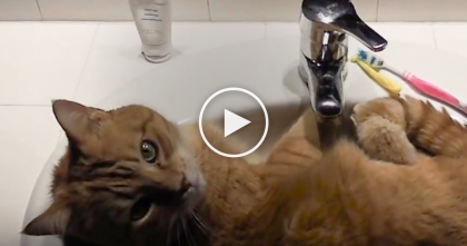 They Woke Up One Morning, Walked Into The Bathroom, But Then… What They Find Is TOO Funny!!