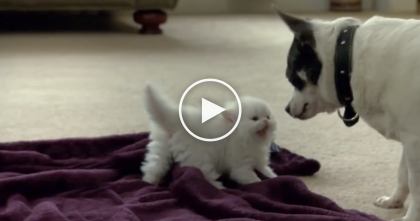 Tiny Fluffy Kitten Gets In A Meowing Match With The Dog, But Then Mommy Notices… SOO Cute!