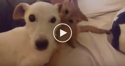 Watch The Dogs Face When His New Friend Just WON'T Stop Giving Him Love… This Is SOO Cute!!