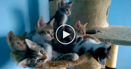 When These Kittens Get On The Dance Floor, You've Gotta Watch The Results… SOO ADORABLE!!