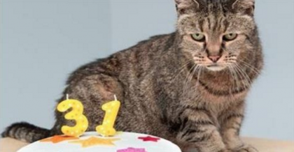 Meet Nutmeg, The World's Oldest Cat With A Heart Bigger Than His Age, Who Won't Give Up!