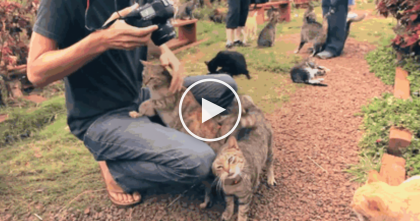 "You Can Cuddle 500 Cats At This Wonderful Place… It's A True ""Kitty Paradise"", You'll Just LOVE It!"