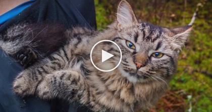 Stray Cats Go Camping With Their Owner, But Watch The End Result… It's The CUTEST Ever, Omg!