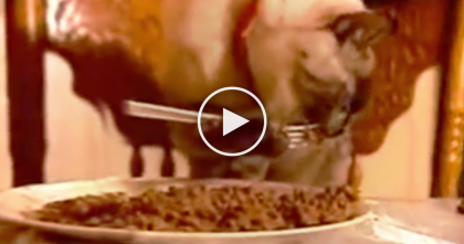 Cat Eats In The WEIRDEST Way I've Ever Seen, But Then… This Is Unbelievable, How Does She Do This?!