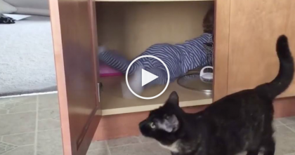Cat Gets Tired Of Watching The Baby, So When The Perfect Opportunity Come Up… This is HILARIOUS.