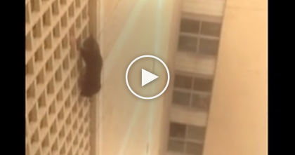 Cat Is Paralyzed With Fear On Seventh Floor Of Building!!….But Students Make A Daring Rescue!