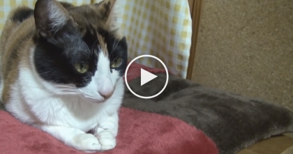 Cat Gets Sleepy, But If You Keep Watching Your Heart Will Melt… This is TOO Darn Adorable!