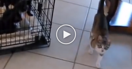 Feral Mom Cat Finds A Way To Get To Her Kittens As The Dog Watches… Surprise Everyone, WOW.
