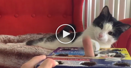 He Cut Holes In A Cardboard Box, But When The Cat Notices His Fingers, It's HILARIOUS…Just Watch It