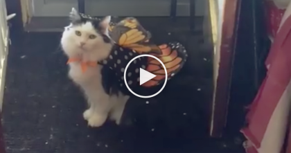 Hilarious Moment When Cat Tries On Costume For First Time, But Her Reaction… LOL, Just Watch!