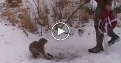Hunters Rescue Terrified Baby Bobcat When They See The Unthinkable… Keep Watching Till The End!