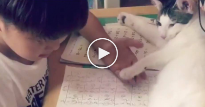 Kid Is Trying To Do Homework, But Just Watch What The Cat Is Doing… Awwww, What A SWEETHEART!