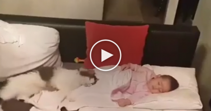 Kitty Refuses To Be Separated From Newborn Baby…WATCH What Happens When They Try And Move Kitty!