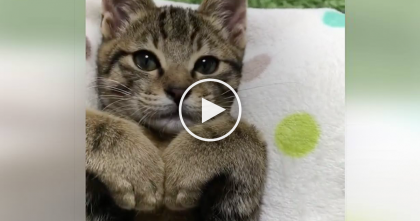 "Kitty Says ""I Love You"" With Her Paws, Just Watch… Your Heart Will MELT When You See How Cute This Is!"