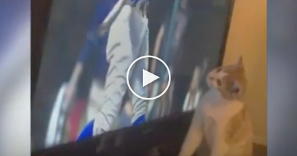 Kitty Starts Watching The World Series Game, But When She Sees The Ball? She Just Can't Resist…