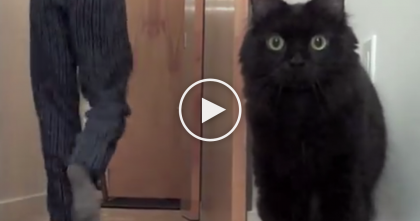 Man Brings Home Balloon…But Just Watch What These Cats Do When They Discover It!