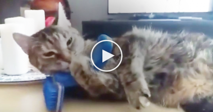 When Nobody Brushes This Cat, She 'Takes Matters Into Her Own Paws'… And The Results Are Hilarious!