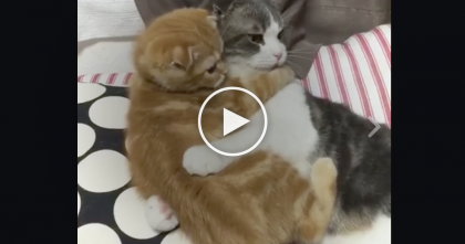 Orange Kitten Tries To Leave His Friend, But Keep Watching Till The End… I Can Hardly Handle It, Omg!