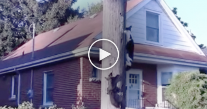 Squirrel Outsmarts Cat Climbing Up Power Pole In The Most Hilarious Way Ever… SOO FUNNY