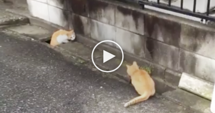 Stray Cats Get Into A Battle Together And The Results Are Just TOO Hilarious… Omg, LOL!!