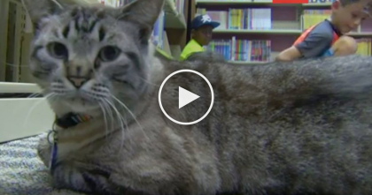 """Library Cat"" Is About To Get Evicted From His Forever Home For A Very Sad Reason… WATCH"
