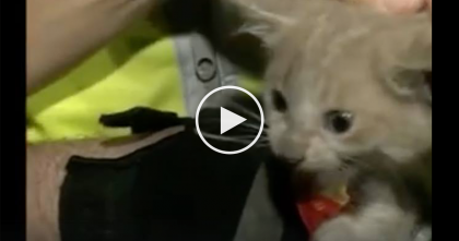 They Heard A Pitiful Meowing Sound, But When They Took A Closer Look… Oh My Goodness!!